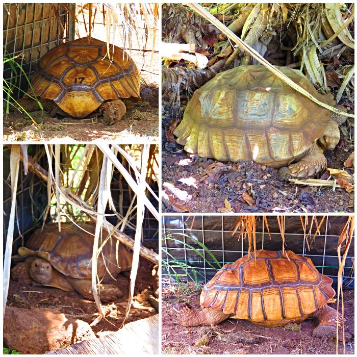 The Tortoise Project