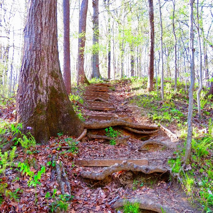 Woodland Trail in Meeman-Shelby Forest State Park