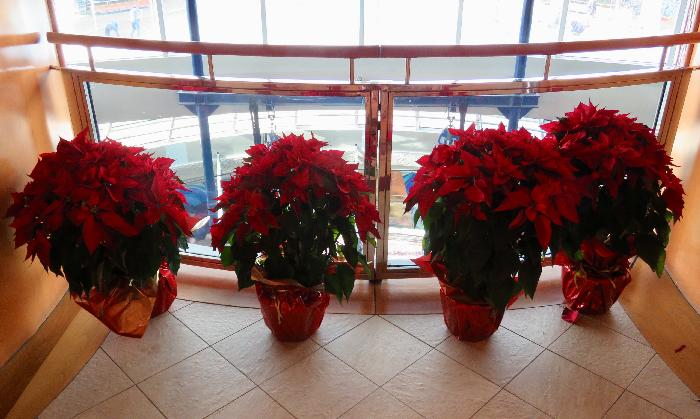 Poinsettias surrounding the Centrum Balconies