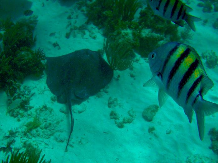Keeping an eye on the Stingray