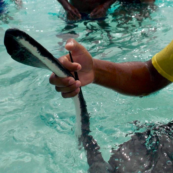 Learning about Stingrays at Stingray City