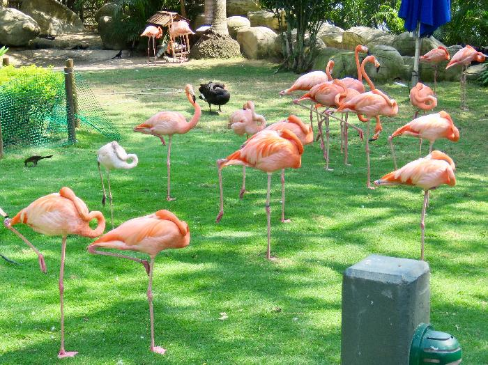 Flamingos Garden at Port of Cartagena
