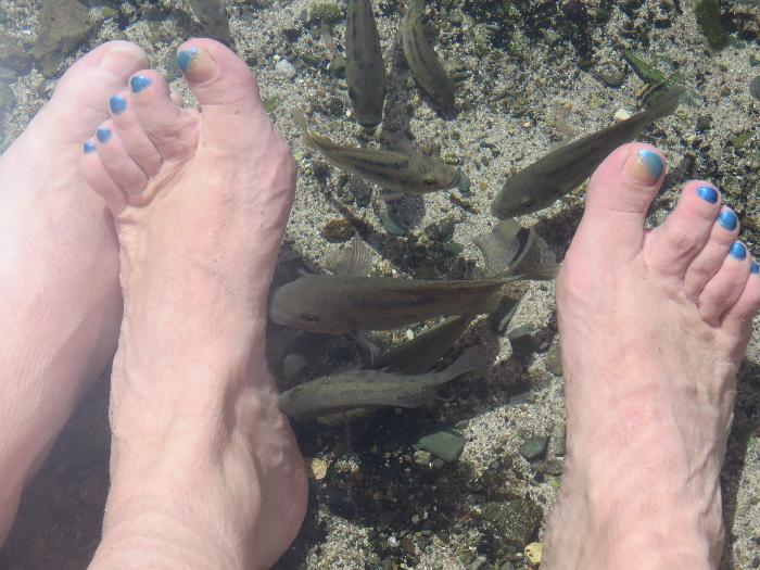 Fish Pedicure at Arikok National Park