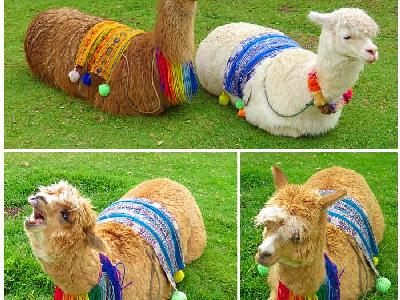 24 Hour Introduction to Cusco, Peru