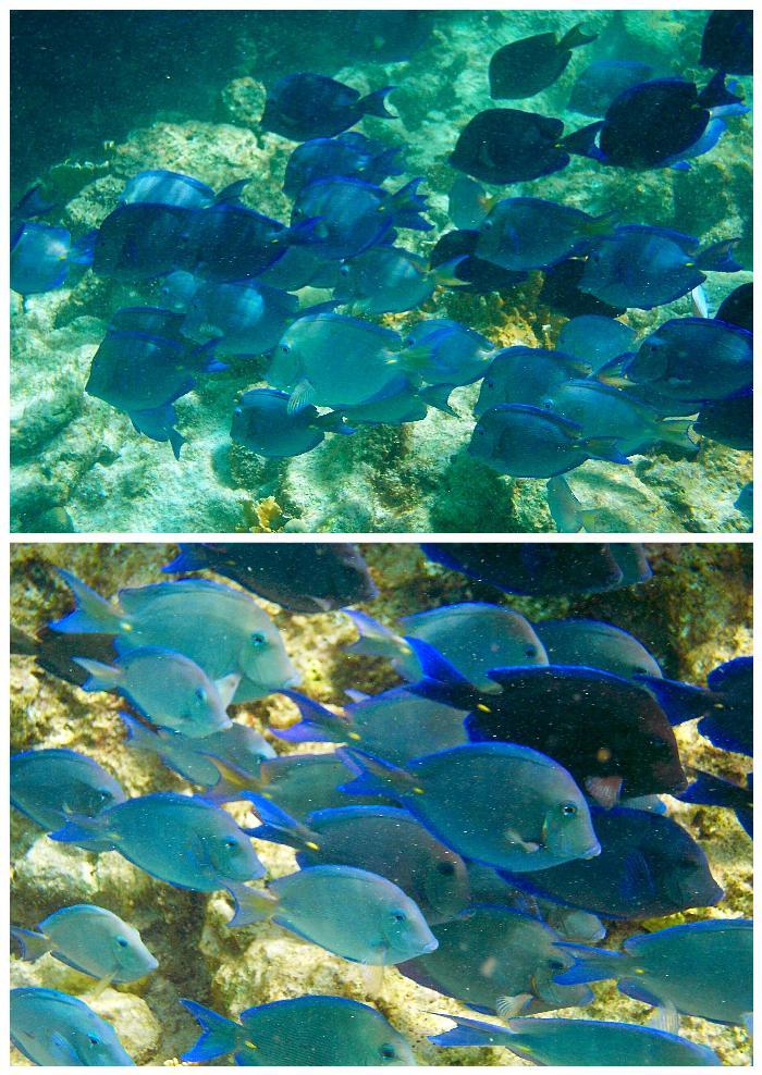 Two Stop Snorkel Tour with Aqua Fun Bonaire | The Wordy Explorers