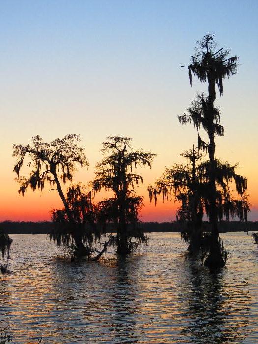 7 Free Attractions in Lafayette, Louisiana
