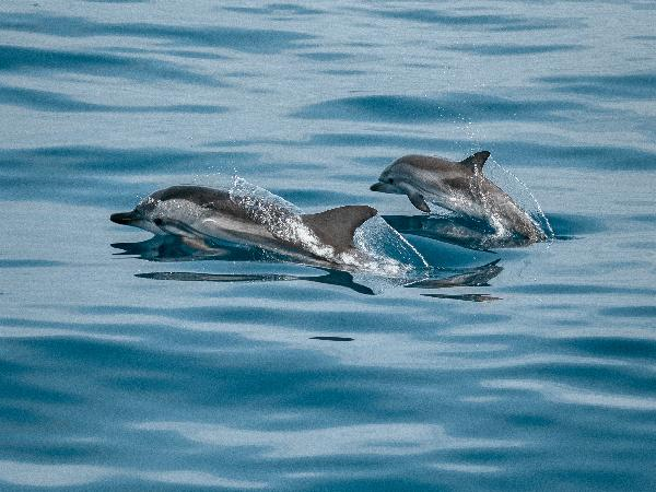 Magical Dolphin Watching in Key West