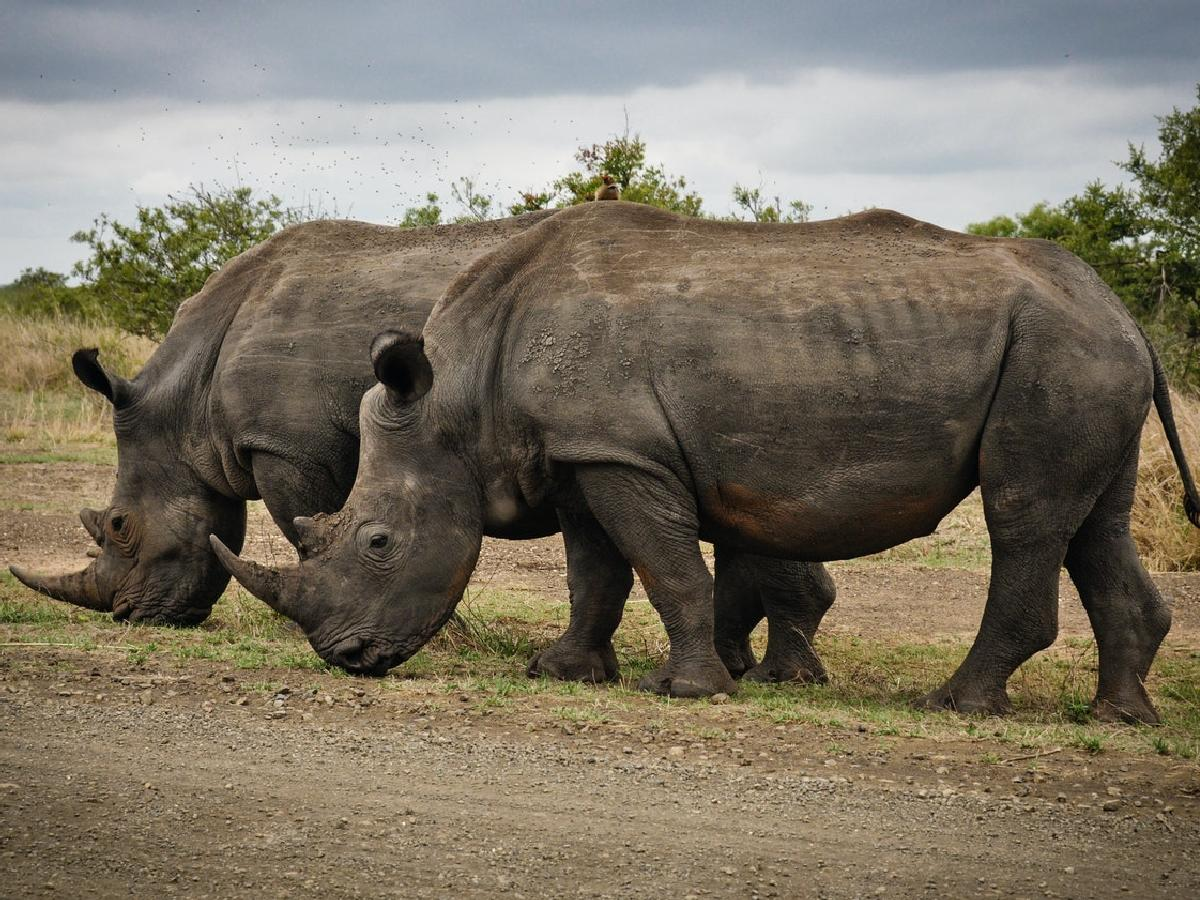 Planning a South Africa Safari? Check out these 11 Parks!